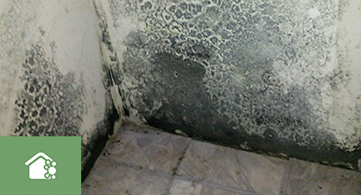 Mold & Mildew Remediation